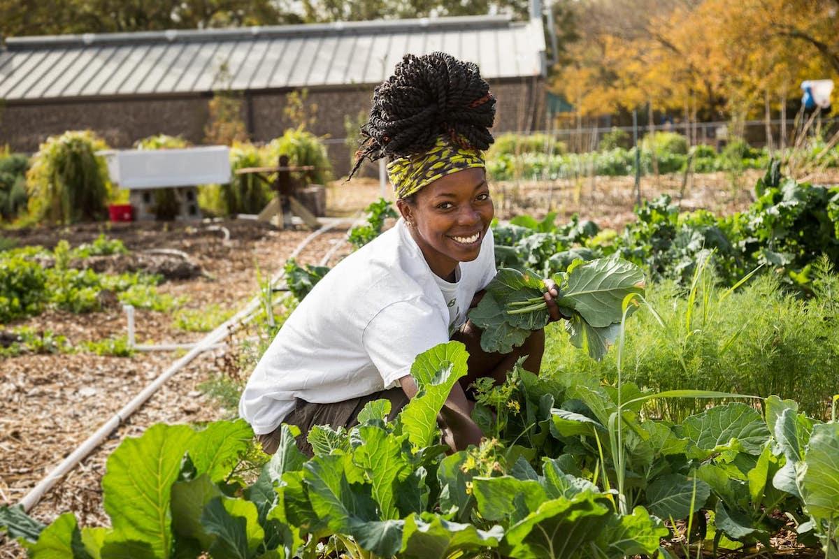 Black Farmers and Agriculturalists (BFAA), Black Farmers, African American Farmers, KOLUMN Magazine, KOLUMN, KINDR'D Magazine, KINDR'D, Willoughby Avenue, WRIIT, Wriit,