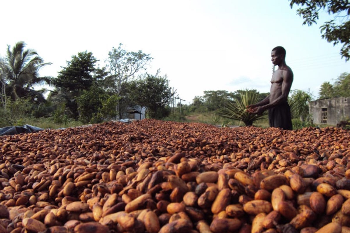 Ghana Business, Chocolate Market, Ghana Chocolate, African Exports, KOLUMN Magazine, KOLUMN, KINDR'D Magazine, Willoughby Avenue, WRIIT, Wriit,