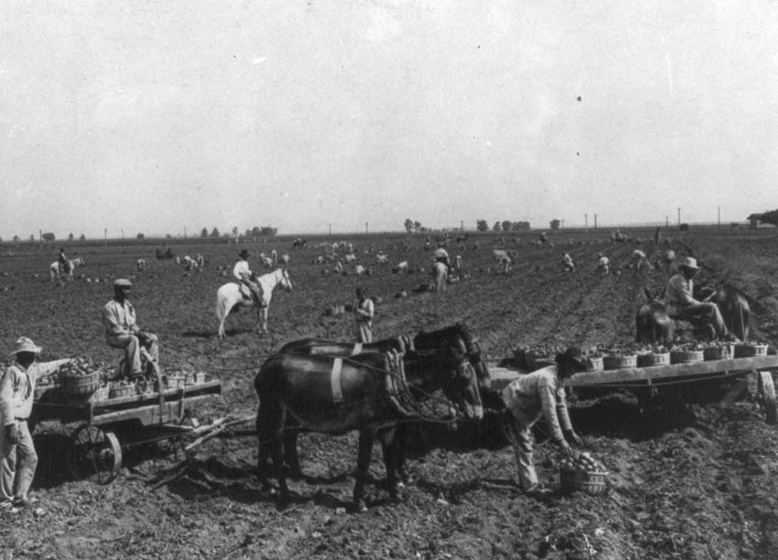 Richmond Texas, Picking Cotton, KOLUMN Magazine, KOLUMN, KINDR'D Magazine, KINDR'D, Willoughby Avenue, Wriit,